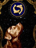 Horoscope for dogs